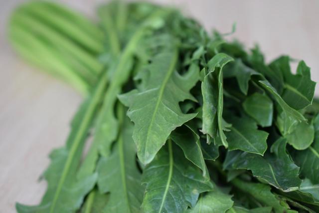 Cikorka - zelenina významná pro detoxikaci organismu